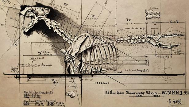 Smilodon Populator Drawing by Konstantinos Fais